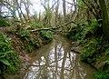 Mincinglake valley Park Exeter - geograph.org.uk - 1083582.jpg