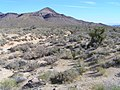 Mojave National Preserve - panoramio (3).jpg
