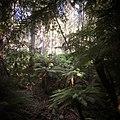 Monga National Park ferns.jpg