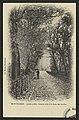 Montélimar - Jardin public - Grande allée à la chute des feuilles (34440417231).jpg