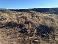 Montezuma Well ruins 5.JPG