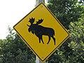 Moosecrossing.jpg