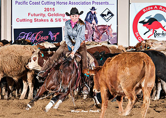 Cutting (sport) - Futurity competition