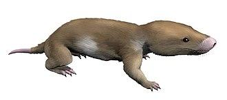 Morganucodon - Life restoration of Morganucodon watsoni