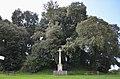 Motte castrale (ou féodale) - Bois de Céné (Vendée).jpg