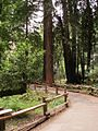 Muir Woods Path.JPG
