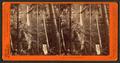 Multnomah Falls, Columbia River, by Watkins, Carleton E., 1829-1916 2.png