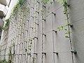 Mur végétalisé passage entre Fossés-Saint-Bernard et Cardinal Lemoine.jpg