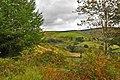 Mynydd Corrwg Fechan - Glyncorrwg - geograph.org.uk - 1505410.jpg