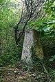 Mynydd Llwydiarth trig - geograph.org.uk - 184990.jpg
