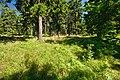 Národní přírodní rezervace Bukačka, okres Rychnov nad Kněžnou (08).jpg