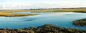 Naval Weapons Station Seal Beach - Marsh wetlands of the Wildlife Refuge.