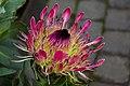 National Botanic Gardens, Dublin (6667099777).jpg