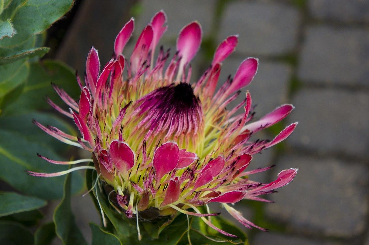File:National Botanic Gardens, Dublin (6667099777)