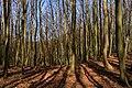 Nationalpark Jasmund, Rügen, 1804060933, ako.jpg