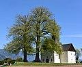 Naturdenkmal St Johanner Kirchenlinden in Villach 1.JPG