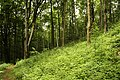 Nature reserve Žižkův vrch in summer 2012 (15).JPG