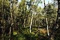 Nature reserve Rájecká rašeliniště in summer 2014 (1).JPG