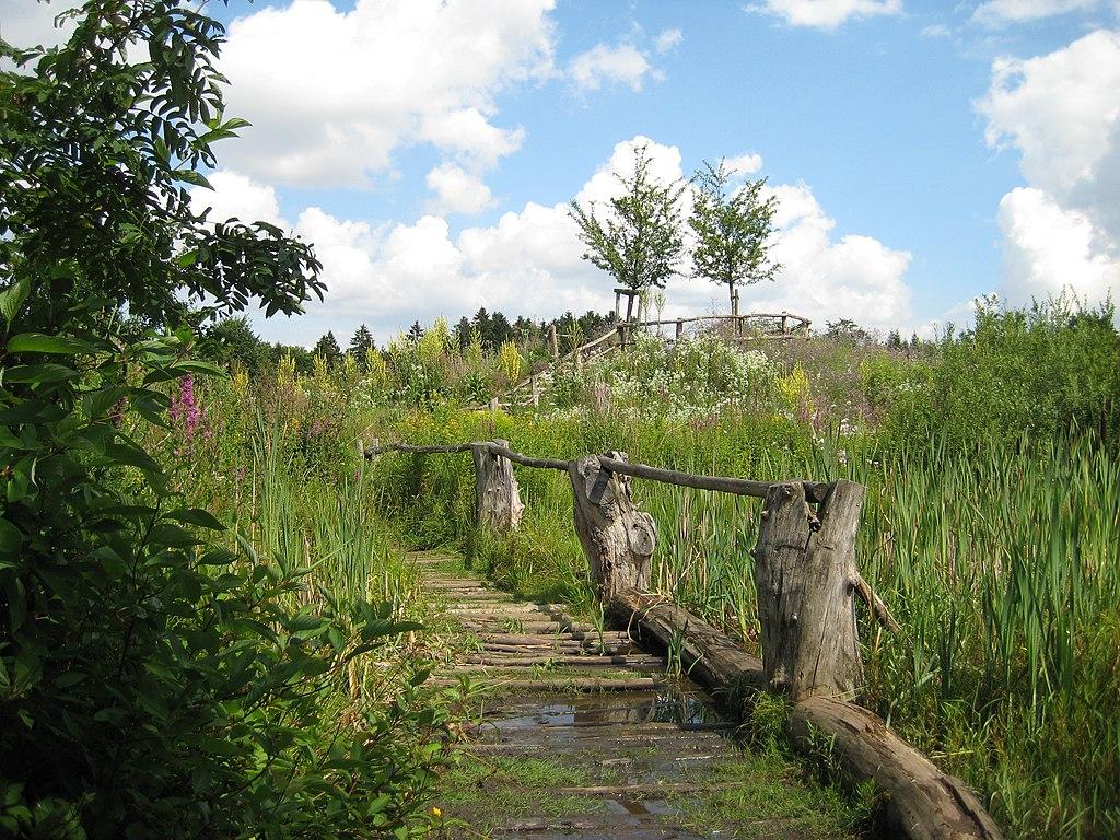 Naturerlebnisraum Erlebniswald Trappenkamp IMG 9144