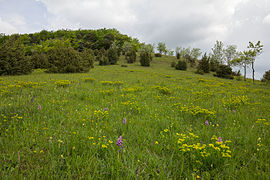 Naturschutzgebiet Apfelberg 02.jpg