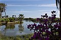 Near Holiday Inn, San Jose del Cabo - panoramio.jpg