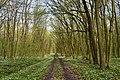 Nekhvoroshcha Volodymyr-Volynskyi Volynska-Nekhvoroshschi nature reserve-view of the central part-1.jpg