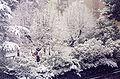 Neve ascoli 1.jpg
