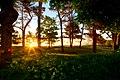 Nice Walk In The Sunrise (180286117).jpeg