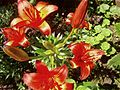 Nice red flower close up macro image.jpg
