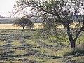 Nogoyá, Entre Ríos, Argentina - panoramio (124).jpg