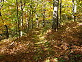 North-fork-fall-trail - West Virginia - ForestWander.jpg