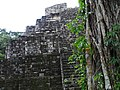 Northern Acropolis - Detail with Tree - Yaxha - Peten - Guatemala (15879699502).jpg