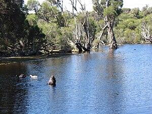 Carine, Western Australia - Birdlife at Lake Carine.