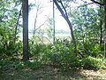 ONF Clearwater Lake01.jpg
