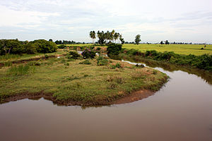 Ampara District - Paddy field in Oluvil