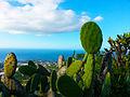 Opuntia ficus-indica Canarias - Tunera Canaria.jpg