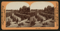 Orange Grove, Riverside, Cal, U.S.A, from Robert N. Dennis collection of stereoscopic views.png