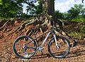 Orbea Alma 29er XTR Enve Bike 002.jpg