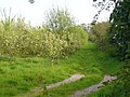 Orchard on Forge Lane - geograph.org.uk - 782745.jpg