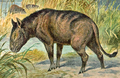Oreodon cropped.png