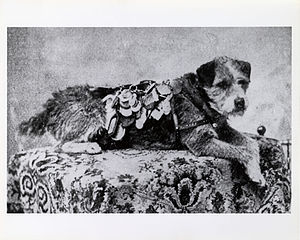Owney (dog) - Owney with some of his dog tags