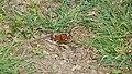 P1020493 Butterfly.jpg