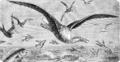 PSM V55 D062 Caribbean albatross.png