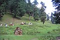 Pahalgam views 05.JPG
