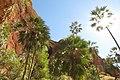 Palms in Echidna Gorge.jpg