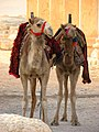 Palmyra (2599946643).jpg