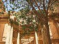 Palmyra (2600792290).jpg