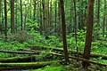 Palustrine Forest (1) (9001981760).jpg