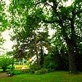 Panorama Botanischer Garten - panoramio (1).jpg