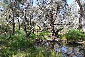 Parkes, New South Wales - Image: Parkes Billabong Creek 001